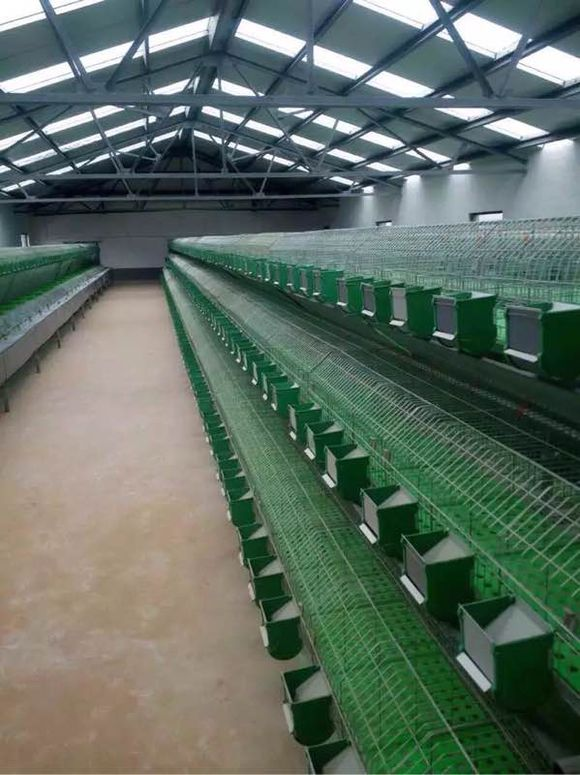 陕西汉中市大型兔厂欧式兔笼安装案例