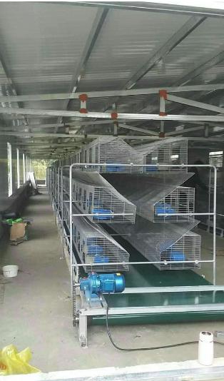 山西太原大型兔厂阶梯式兔笼