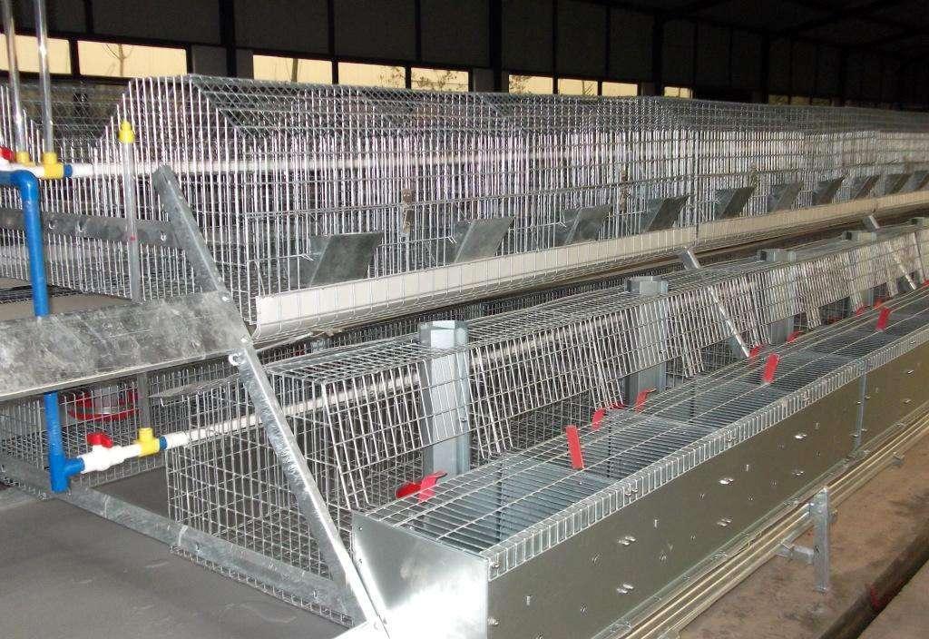 江苏南京市大型兔厂欧式兔笼安装案例
