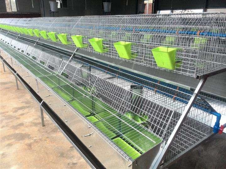 湖北怀化市大型兔厂欧式兔笼安装案例