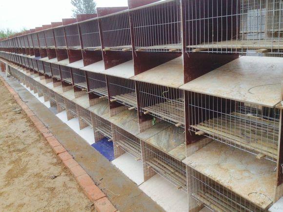 聊城瓷砖兔笼安装案例