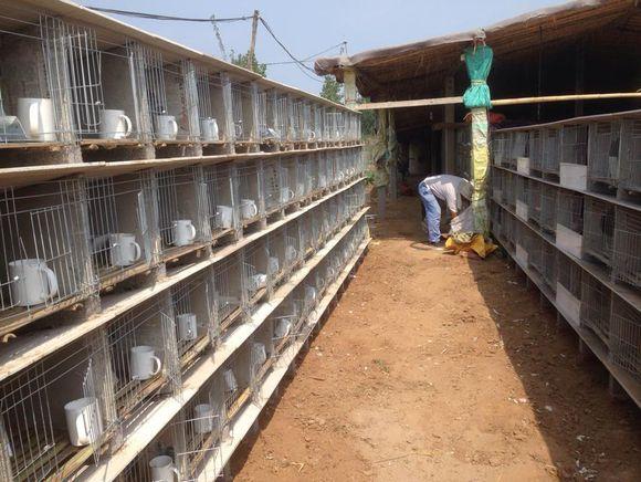 威海瓷砖兔笼案例