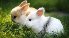 兔子生病与哪些因素有关
