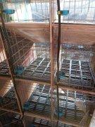 山东兔笼厂家谈养兔成功