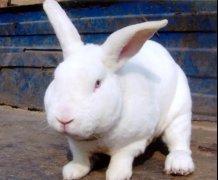 河北兔笼厂家谈如何养好