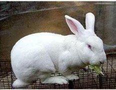 tie丝兔笼厂家谈:养兔都